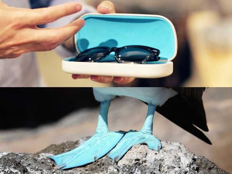 warby-parker-bird-case